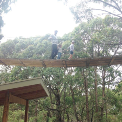 treetop-walk