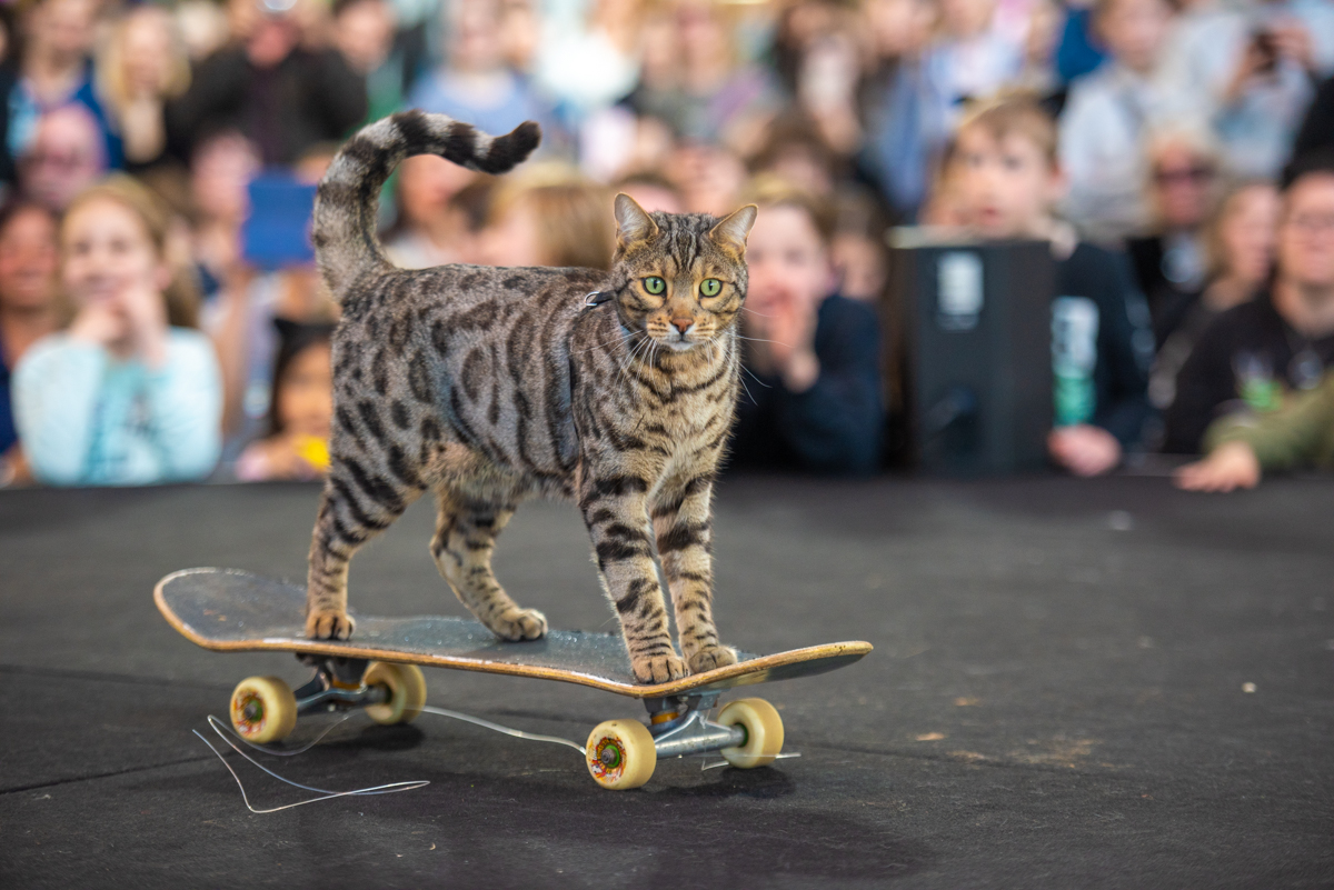 CAT LOVERS 2018 MELB sat-255