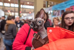 CAT LOVERS 2018 MELB sat-87